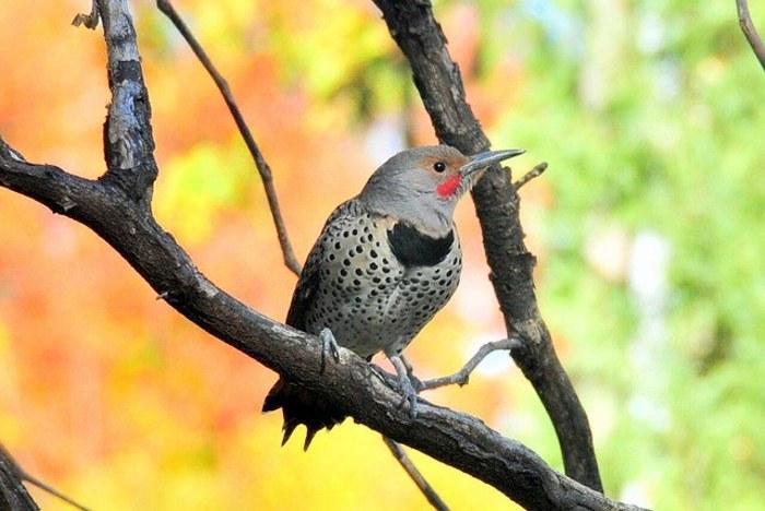 birds-small