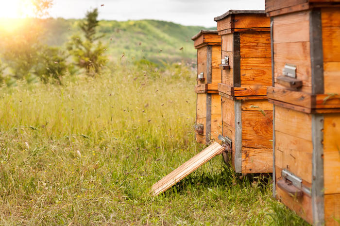 types of beehive in your backyard
